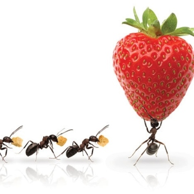 ants20extraordinary20covey